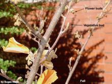 buds, fall