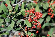 fruit and leaves, winter