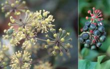 flowers and developing fruit