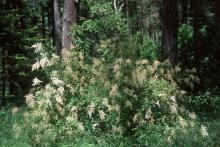plant habit, in the forest
