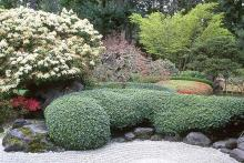 plant habit, formal hedge