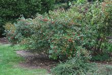 plant habit fruiting, fall