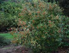 plant habit, fall fruiting