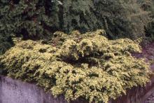 plant habit, spring