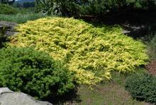 plant habit