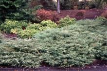 plant habit, several plants