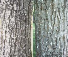 trunk, bark
