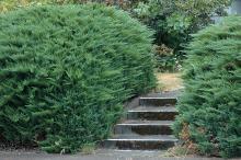 older plant habit