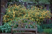 plant habit, spring flowering, large plant