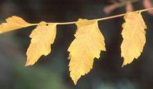 leaflets, fall
