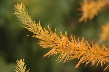 branch, fall