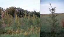 native habitat, bog edge