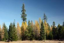 fall, mixed conifer forest, central Oregon