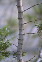 stem, bark