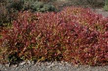 plant habit, early spring