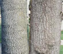 trunks, bark