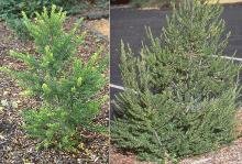plant habit, small plants