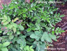 plant, comparison