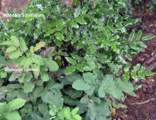 plants, comparison