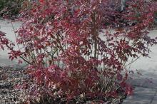 plant habit, winter in full sun