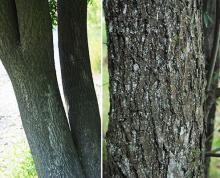 trunks and bark