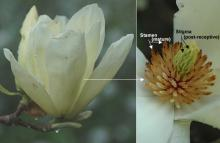 flower near petal drop