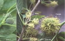 flowers, male and female