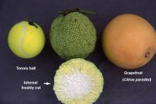 fruit, comparisons