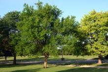 plant habit, in a landscape