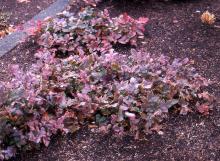 plant habit, winter, exposed site