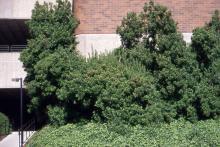 plant habit, several shrubs