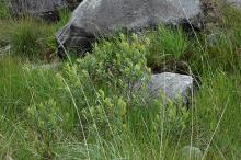 in bog habitat