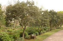 plant habit, row of trees