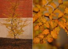 plant habit and leaves, fall