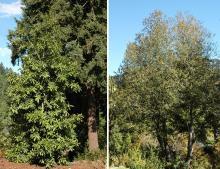 plant habit, tree form