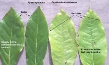 leaves, comparison