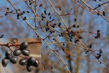 fruit, winter