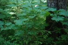 plant habit, in forest habitat