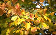 leaves, fall