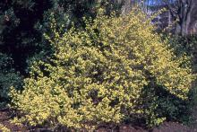 plant habit, late spring