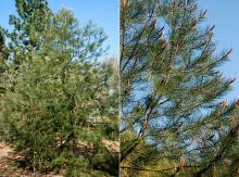 plant habit, young tree, spring