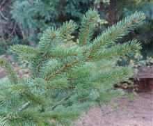 branch, foliage