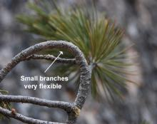 small branch, bent