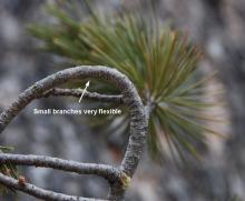 flexible branch