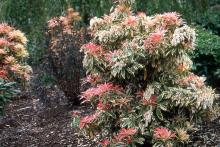 plant habit, flowering and new growth