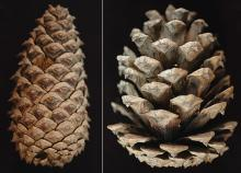 cone, closed and open