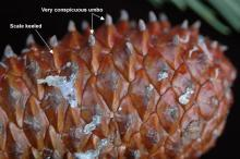 cone surface