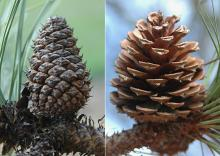 cones, closed and open
