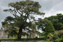 plant habit, old tree