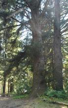 trunk, bark; in habitat